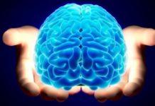 Названо доступні суперпродукти, які забезпечують здоров'я мозку